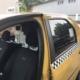 Прозрачни предпазни прегради за таксита срещу коронавирус